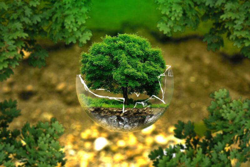 Thema Umwelt